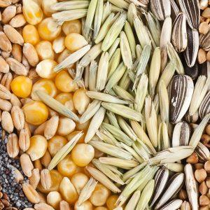 Семена за поръски